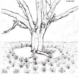 Memorial Oak Grove tree